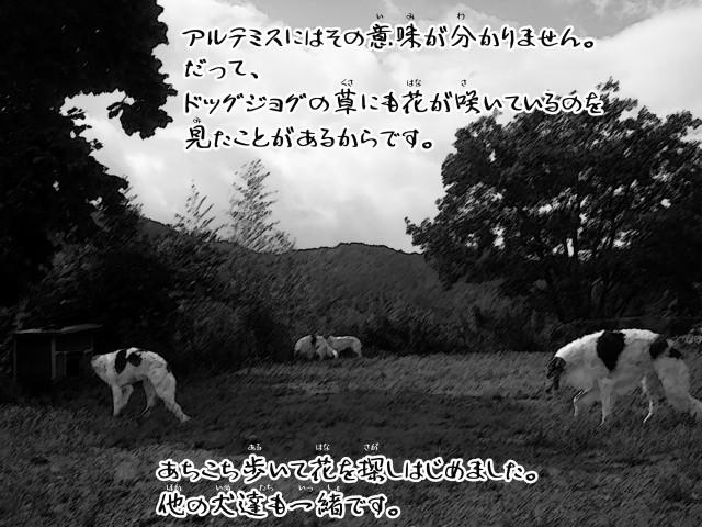 ボルゾイとお付きの超田舎的物語 11