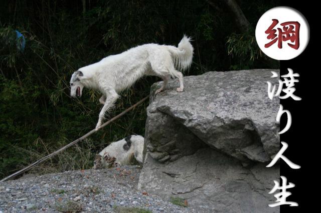石があれば登るし、水があれば泳ぐ。布団があれば寝るし、芋を食えばへが出る。人生とはそう言うものだ