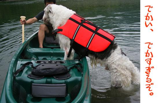 ボルゾイの無理があるカヌーの乗り方