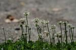 かわいい花