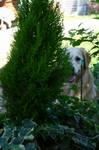 プラムの木はアルちゃんが折りました。