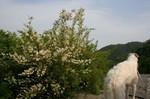 川にも綺麗な花が・・