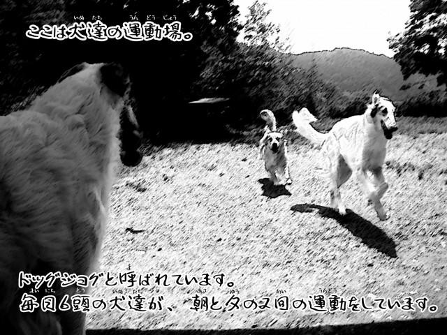 ボルゾイとお付きの超田舎的生活物語2
