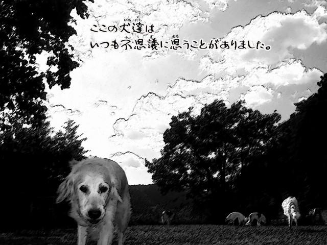 ボルゾイとお付きの超田舎的物語 3
