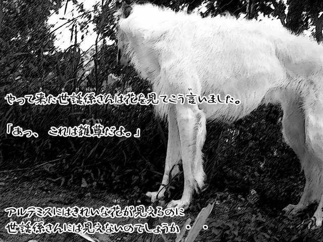 ボルゾイとお付きの超田舎的物語 14